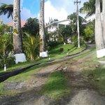 Royal Palm-lined entrance