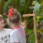 chatting with the spanish speaking macaw