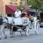 Ladybug Carriage Tours