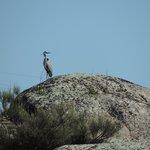 Actividades Barbancho - Avistamiento de aves