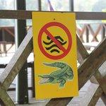 Don't feed the crocodiles