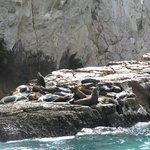 Sea Lion Colony -Lands End