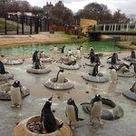 Penguin rock