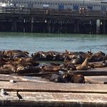 Sea lions are entertaining