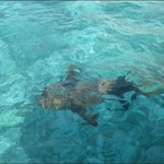 There are plenty of nurse sharks around without needing to feed them!