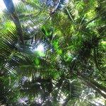 The Beautiful Canopy