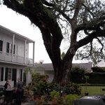 Beautiful live oak