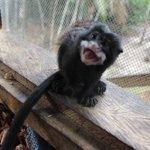 monkey:-)