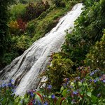 Shaw Park Waterfall