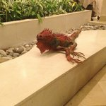 Art iguana in foyer