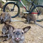 One of our cheeky local wallabies