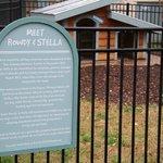 Rowdy & Stella's home