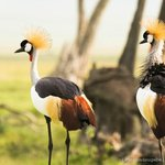 More beautiful birds - crawn chord!!