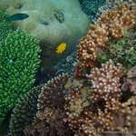 More snorkel views