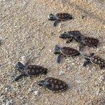 battesimo delle tartarughe