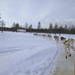 dogs sleigh ride