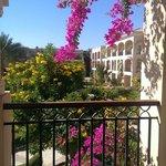 Stunning flowers on the balcony