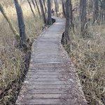 Vlonderpad Rode beek, bij Vlodrop station ( niet aangegeven wegens ecologisch kwetsbaar)