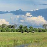 The beautiful Savuti Marsh