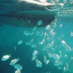 A school of fish by the catamaran...