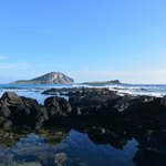 Rabbit Island 2014