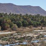 La vallée du ZIZ : La palmeraie