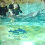 Beki's dolphin swim <3