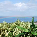Morning showers mean wonderful rainbows from the terrace