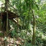 Hanging Bridge & Platform