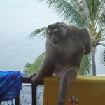 An early morning visitor to our balcony
