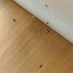 Roaches in the living room