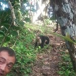 Pierre and a white faced capuchin monkey