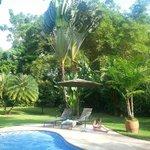 Beautiful pool and gardens