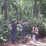 Pierre shows us the Howler Monkeys in Cahuita National Park