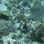 Scuba diving in Riviera Maya