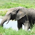 Close up Elephant