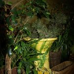 et partout des bouquets de plantes et de fleurs séchées