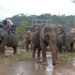 elephants around the fall