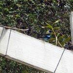 fantastic birds on property