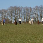 Alpaca Walking - with Spring Farm Alpacas
