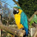 Tropical birdland 9th March!
