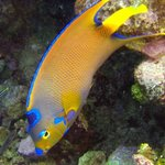 Lots of colorful reef fish