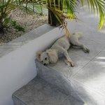 Menacing watchdog