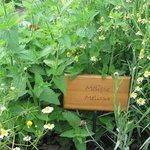 reichlich ausgestatteter Kräutergarten