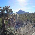 Beautiful desert scenes
