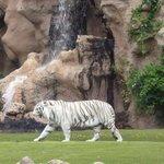 Isla del Tigre