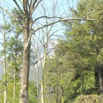 Photo of Pine Ridge Lodge