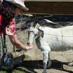 Feeding a goat at Wai Ariki