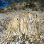 Fossilized Stump