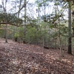 Wooded area of the battlefield